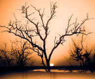 Por do sol africano no delta Imagens de Stock