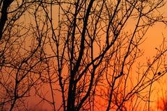 Por do sol africano no parque nacional de Kruger, África do Sul fotografia de stock