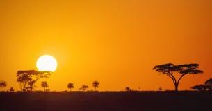 Por do sol africano panorâmico bonito nas planícies do savana do parque de Serengeti, Tanzânia, África fotografia de stock
