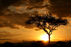 Por do sol africano. Tanzânia, África Fotos de Stock