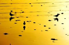 Por do sol alaranjado com gaivotas Imagens de Stock Royalty Free