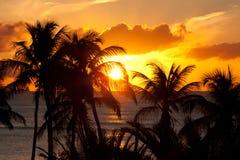 Por do sol alaranjado com palmeiras foto de stock royalty free
