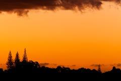 Por do sol alaranjado e silhuetas de pinhos de Norfolk Imagens de Stock