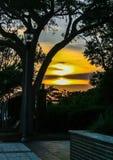 Por do sol alinhado árvore Imagens de Stock