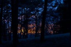 Por do sol amarelo-alaranjado irreal, fantástico nas árvores na floresta, montanhas Kislovodsk, Rússia Imagem de Stock Royalty Free