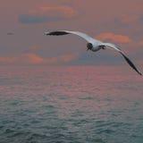 Por do sol antes da tempestade Imagem de Stock