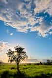 Por do sol atrás da árvore fotos de stock