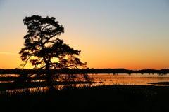Por do sol atrás da árvore de cipreste fotografia de stock