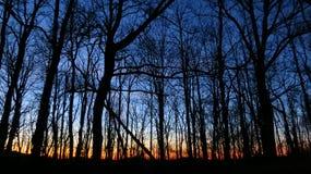 Por do sol atrás das árvores Fotografia de Stock Royalty Free