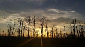 Por do sol atrás das árvores Fotos de Stock