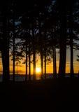 Por do sol atrás das árvores Fotos de Stock Royalty Free