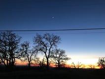 Por do sol atrás das árvores leafless fotografia de stock royalty free