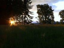 Por do sol atrás das árvores no monte Fotografia de Stock
