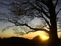 Por do sol atrás de uma árvore Fotos de Stock Royalty Free