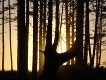 Por do sol atrás do tress na praia EUA Foto de Stock