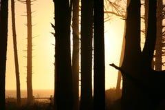 Por do sol atrás do tress na praia EUA Fotografia de Stock Royalty Free