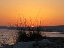 Por do sol atrás dos arbustos Imagens de Stock