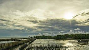 Por do sol atr?s das nuvens As nuvens movem a floresta rápida dos manguezais durante o período da maré baixa A linha de bambu imp filme