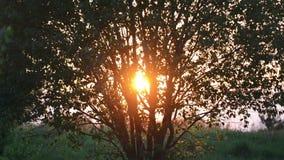 Por do sol através da árvore vídeos de arquivo