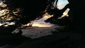 Por do sol através das árvores Fotografia de Stock Royalty Free