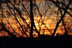 Por do sol através das árvores Fotos de Stock