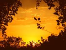 Por do sol através das árvores imagem de stock