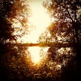 Por do sol através das árvores Fotografia de Stock