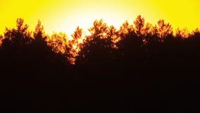 Por do sol através das árvores. Close-up. Livre do brilho vídeos de arquivo