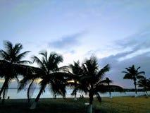 Por do sol através das árvores de coco foto de stock