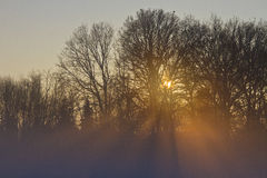 Por do sol através das árvores e da névoa Fotos de Stock