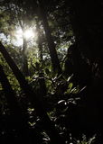 Por do sol através das madeiras Foto de Stock