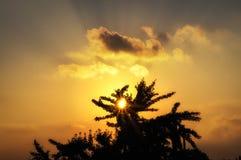 Por do sol através de uma árvore Foto de Stock Royalty Free