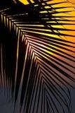 Por do sol através de uma fronda da palmeira Fotografia de Stock Royalty Free
