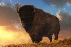 por do sol do búfalo ilustração stock