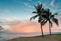 Por do sol bonito com as duas palmeiras sobre o horizonte do oceano Fotos de Stock
