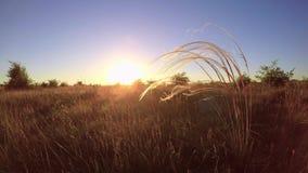 Por do sol bonito com planta do stipa vídeos de arquivo