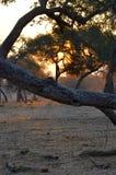Por do sol bonito das mana-associações Imagem de Stock Royalty Free