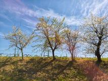 Por do sol bonito e três Imagem de Stock Royalty Free