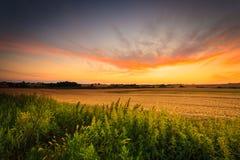 Por do sol bonito em um campo da mola Imagem de Stock