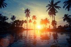 Por do sol bonito entre as palmas em uma praia tropical nave Fotografia de Stock