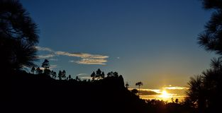Por do sol bonito entre pinhos Foto de Stock