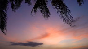 Por do sol bonito na praia com palmeiras e barcos video estoque