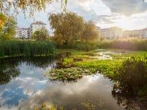 Por do sol bonito no céu nebuloso sobre uma lagoa pequena Lírios de água em uma lagoa pequena imagens de stock royalty free