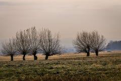 Por do sol bonito no campo Imagem de Stock