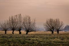 Por do sol bonito no campo Fotografia de Stock