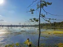 Por do sol bonito no lago da seiva de Tonle, Camboja foto de stock royalty free