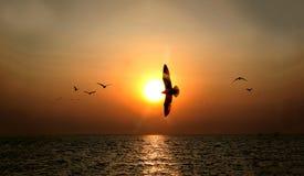 Por do sol bonito sobre o mar com as silhuetas da gaivota no cais Fotografia de Stock