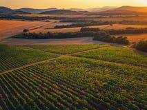 Por do sol bonito sobre o vinhedo em Europa, vista aérea imagens de stock