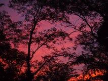 Por do sol brilhante Imagem de Stock