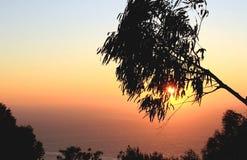 Por do sol brilhante e a árvore Imagens de Stock Royalty Free